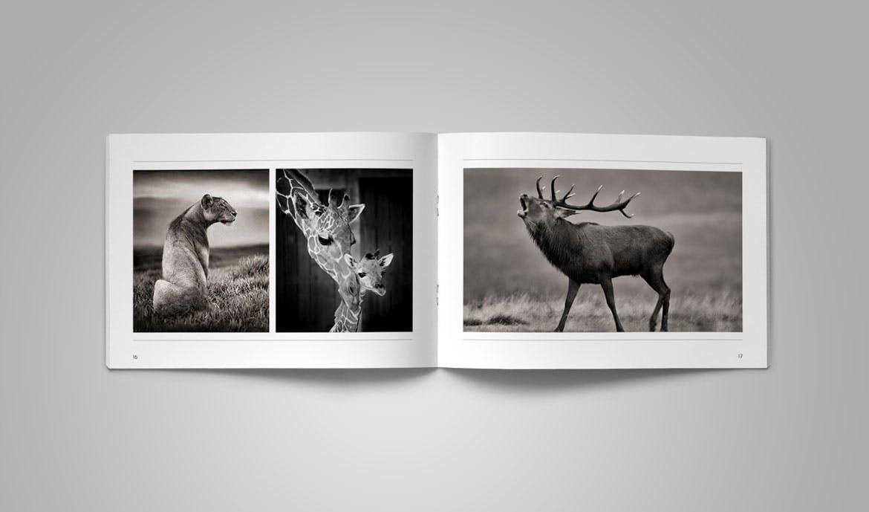 indesign攝影作品集模板圖片